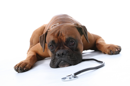 What You Should Know About Cancer and pets 3